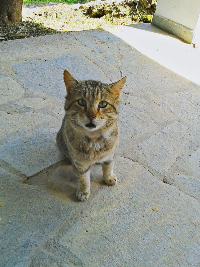 Cat♡ Cute Animals Cat Watching Gat