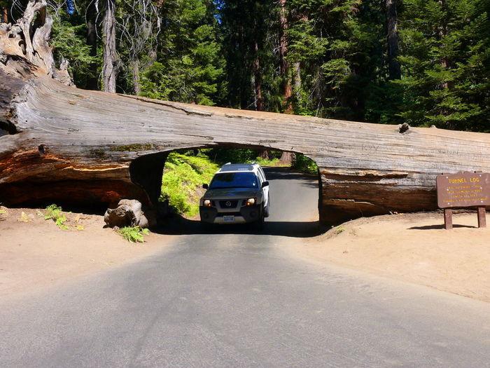 Usa Trip 2013 Roadtrip Sequoia National Park Tunnel Log