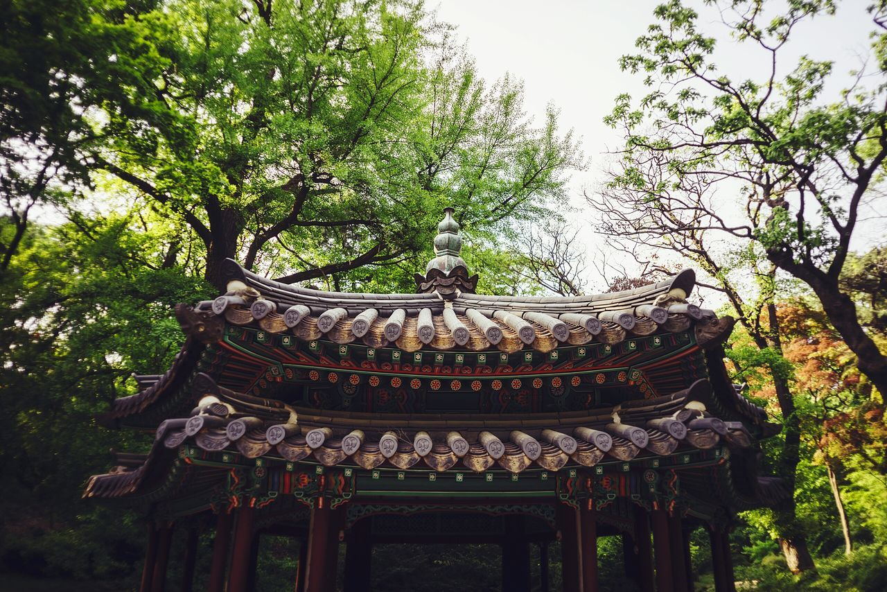 Spring Into Spring Changdeokgung Palace Changdeokgung Spring Nature South Korea ASIA 창덕궁 창덕궁 후원 창경궁 비원 Achitecture Traditional Architecture Trevel