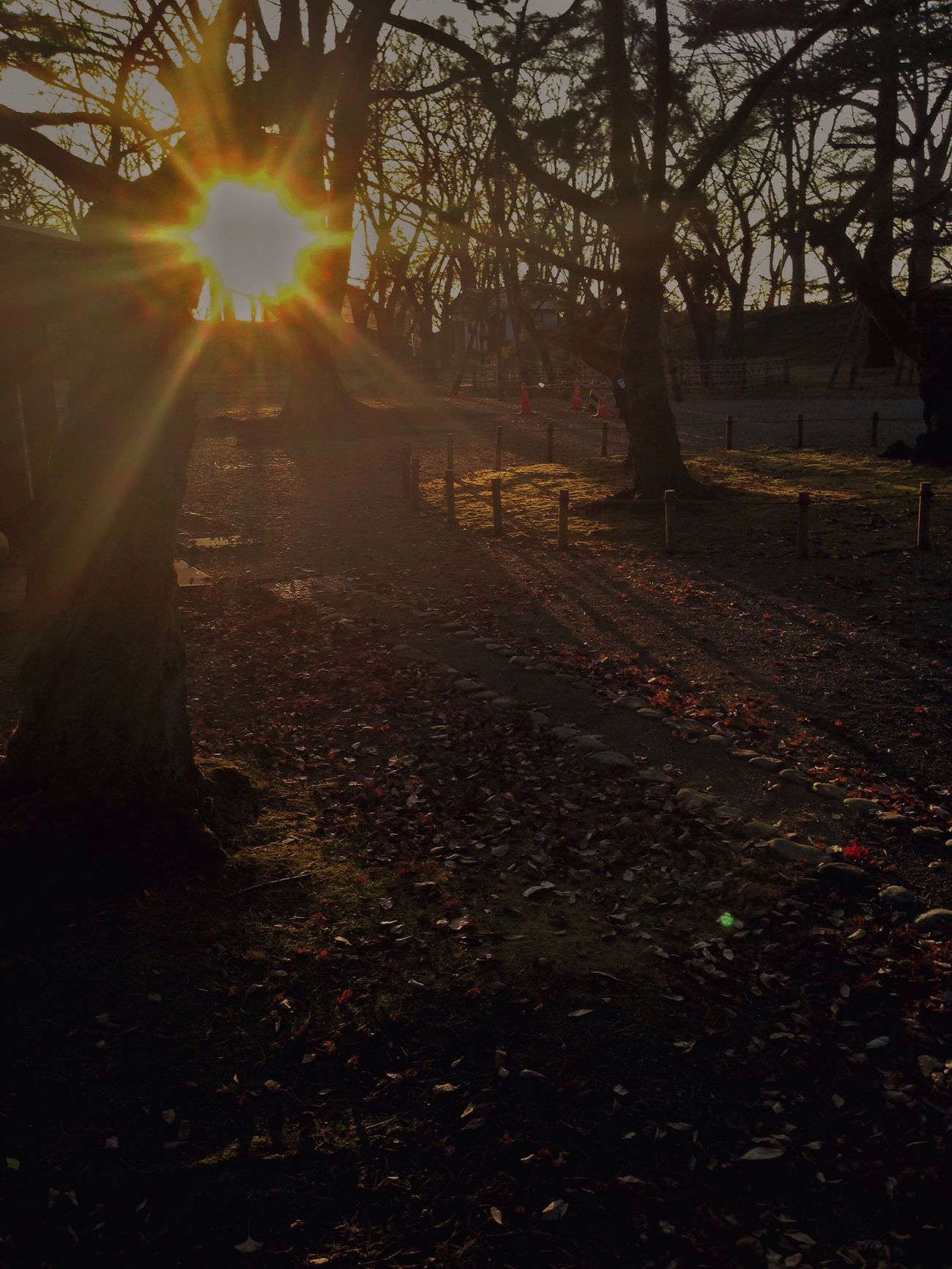 IPhone IPhoneography Mobilephotography Sunlight And Shadow Beauty In Nature Autumn Sunlight No People Autumn Nature Light And Shadow Beauty In Nature EyeEm Nature Lover Golden Hour EvningGlow