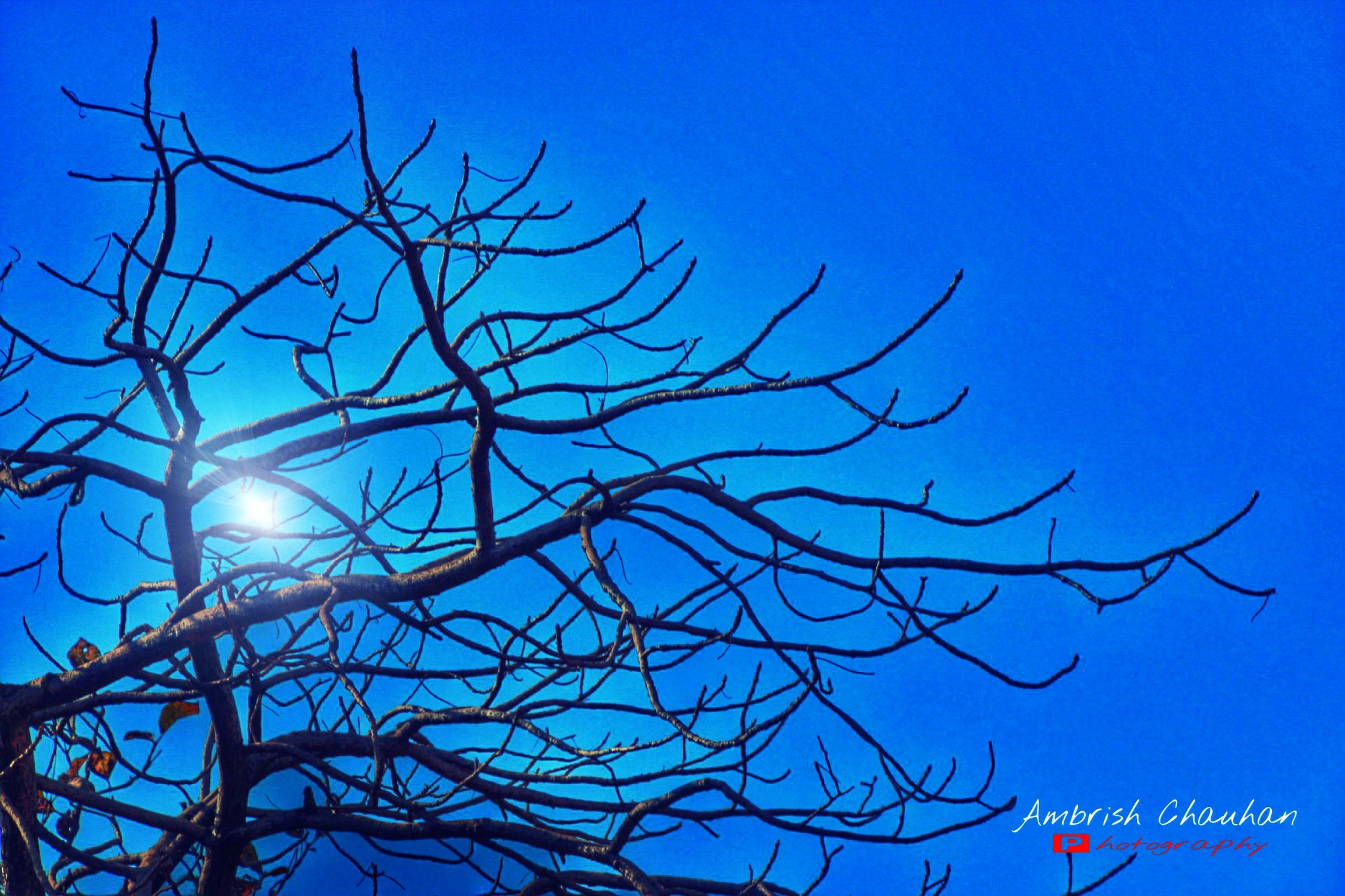 bare tree, clear sky, blue, low angle view, branch, tree, nature, copy space, tranquility, beauty in nature, no people, outdoors, dead plant, sky, day, silhouette, scenics, dried plant, dusk, sunlight