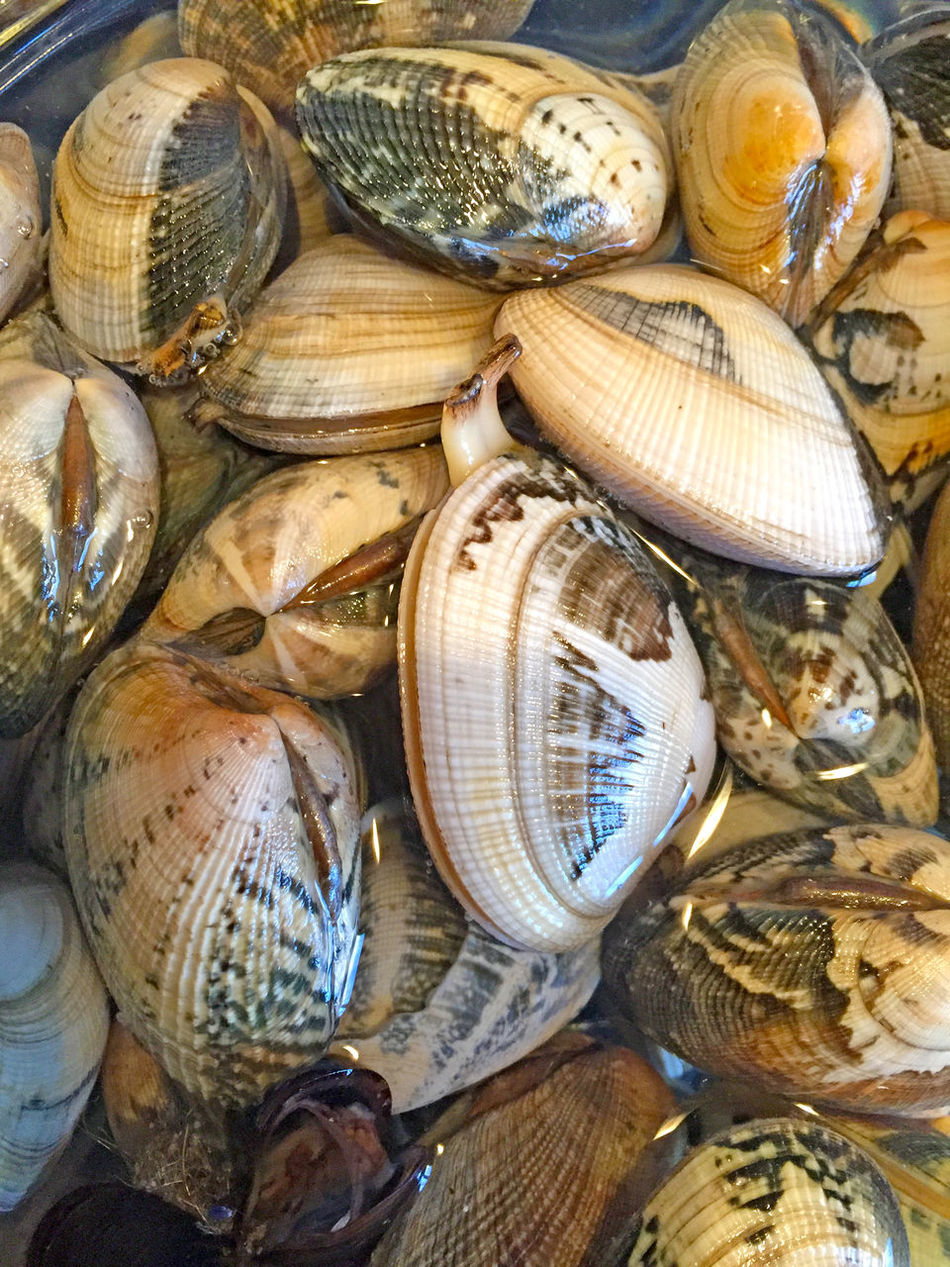Abstract Animal Aquatic Aquatic Animal Backgrounds Clam Close-up Cockles Crustacean Day Food Food And Drink For Sale Freshness Healthy Eating Indoors  Market Market Stall No People Retail  Seafood Seafoods SHELLFISH  Texture Textured