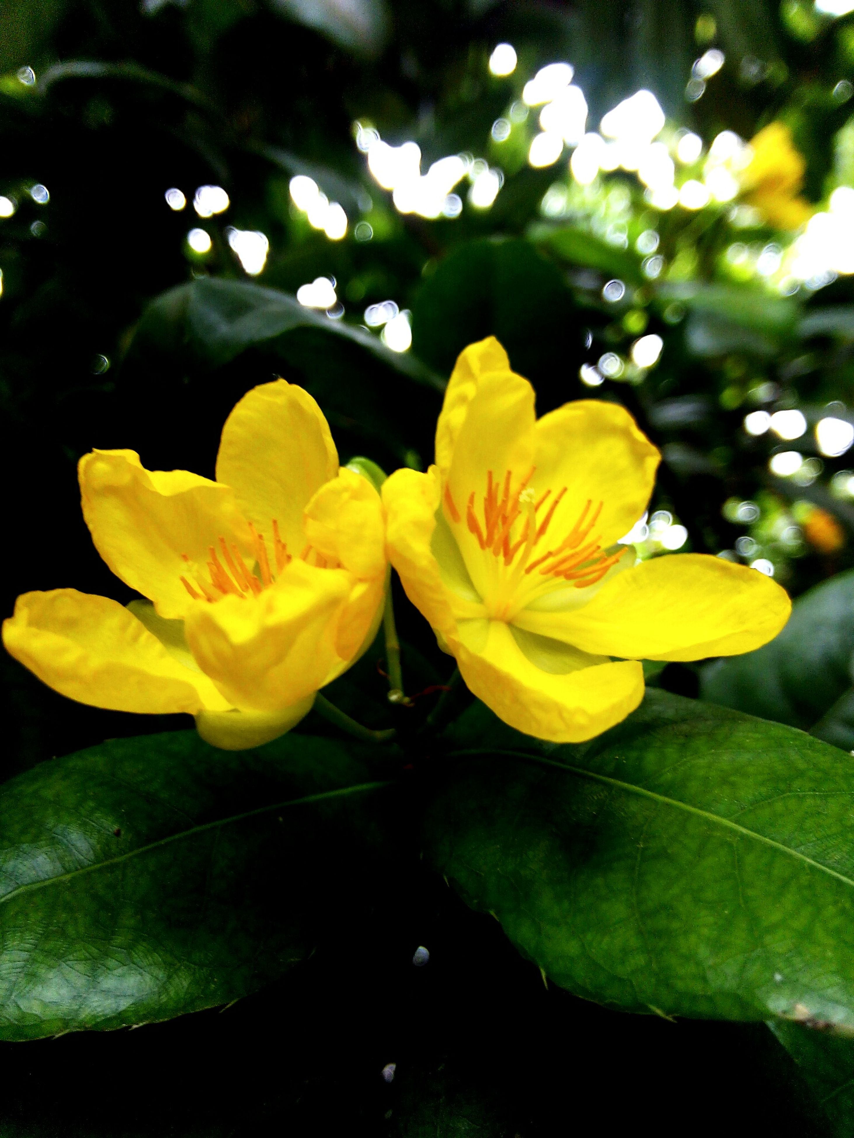 flower, petal, yellow, freshness, fragility, growth, flower head, beauty in nature, close-up, focus on foreground, leaf, nature, plant, blooming, park - man made space, day, green color, outdoors, in bloom, no people