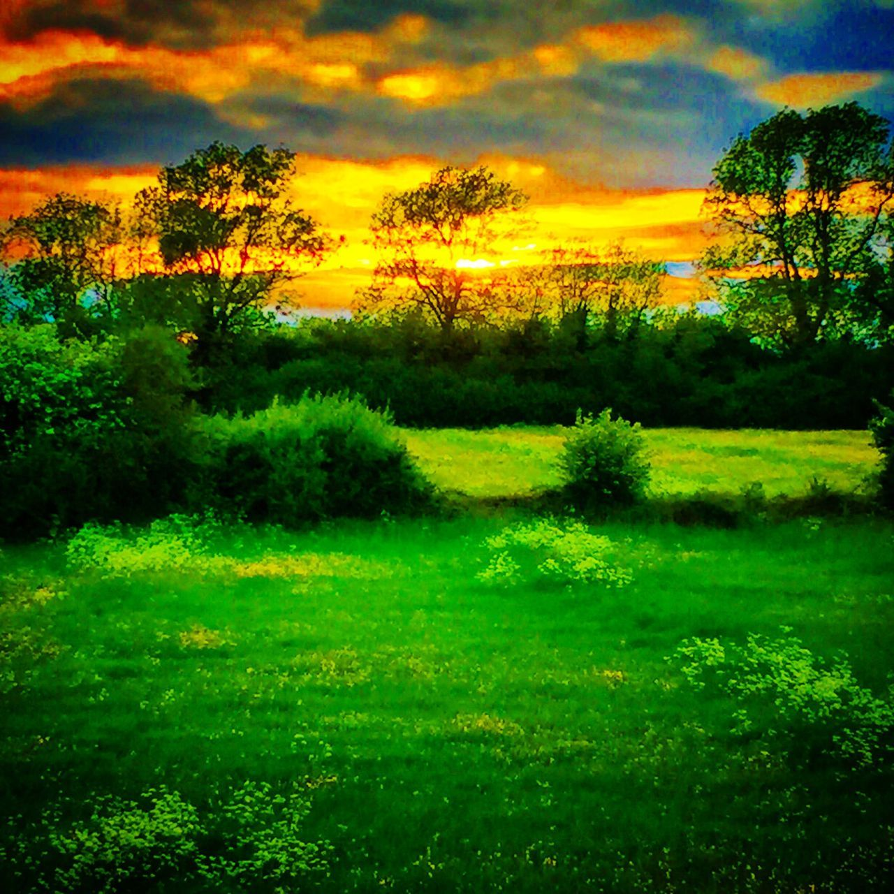 Green fields in the uk with sunset Sunset Sun Fields Green Fields Northampton Northamptonshire Northants Weather Weather Channel Green Grass Hedges Trees Gardens Garden
