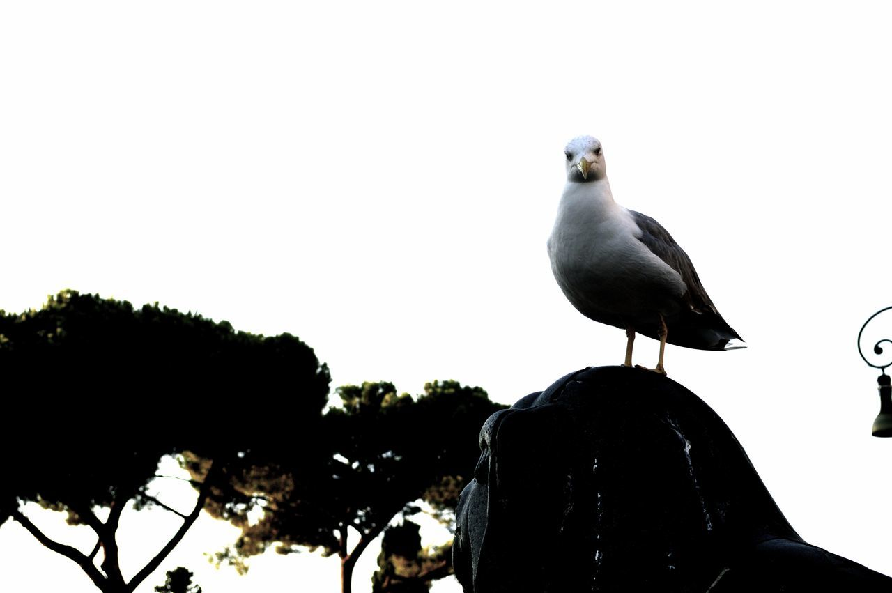 Animal Themes Animal Wildlife Animals In The Wild Beauty In Nature Bird Blackandwhite Clear Sky Cleptomanicx Day Move Möwe Nature No People One Animal Outdoors Perching S
