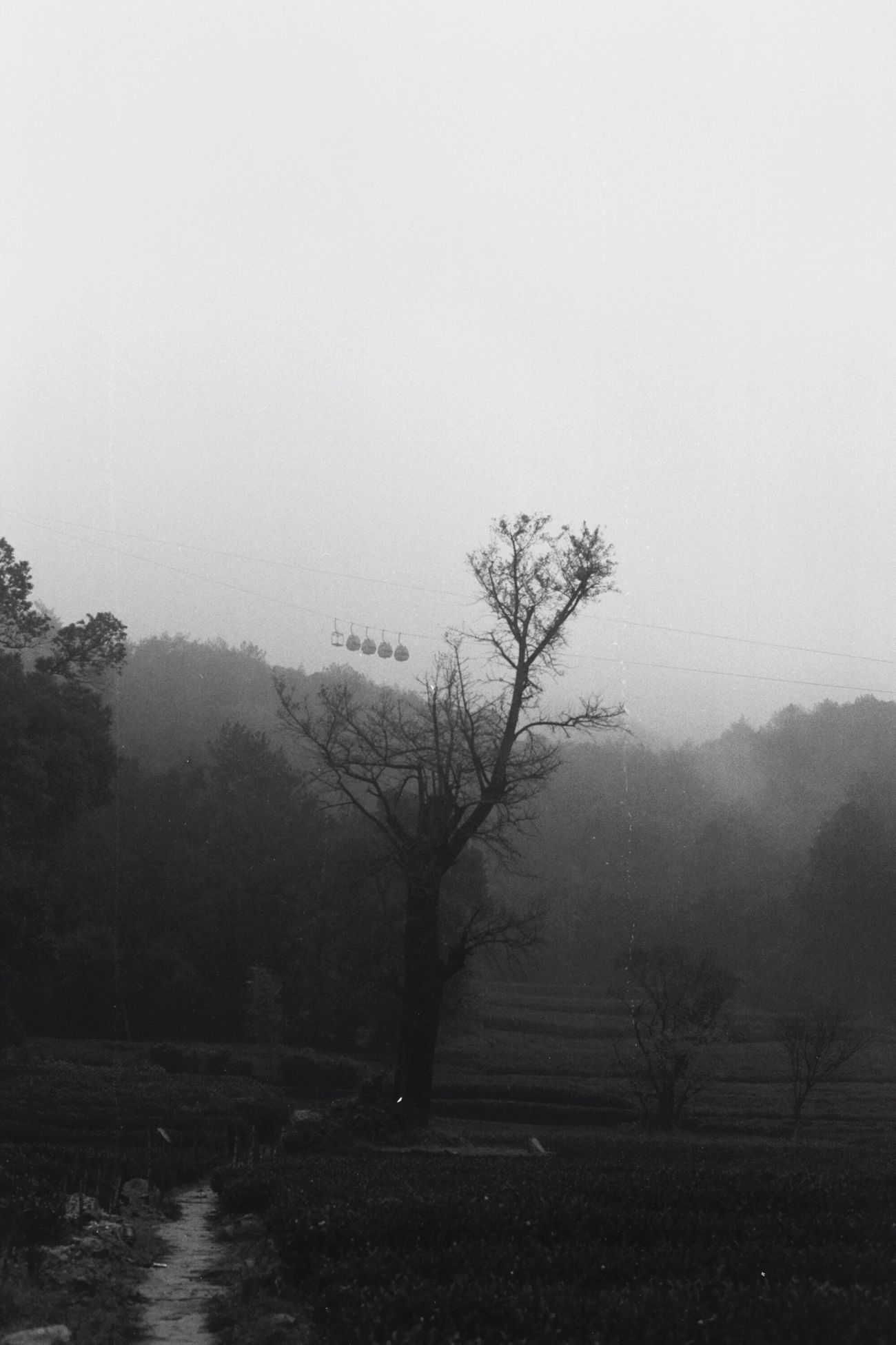 Landscape No People Mist Chinese Black And White Black & White Tree Outdoors