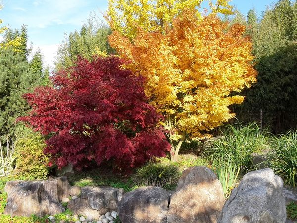 Trees Tree Nature Beauty In Nature Autumn Leaves Autumn🍁🍁🍁 Outdoors