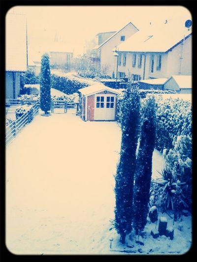 I love Schnee