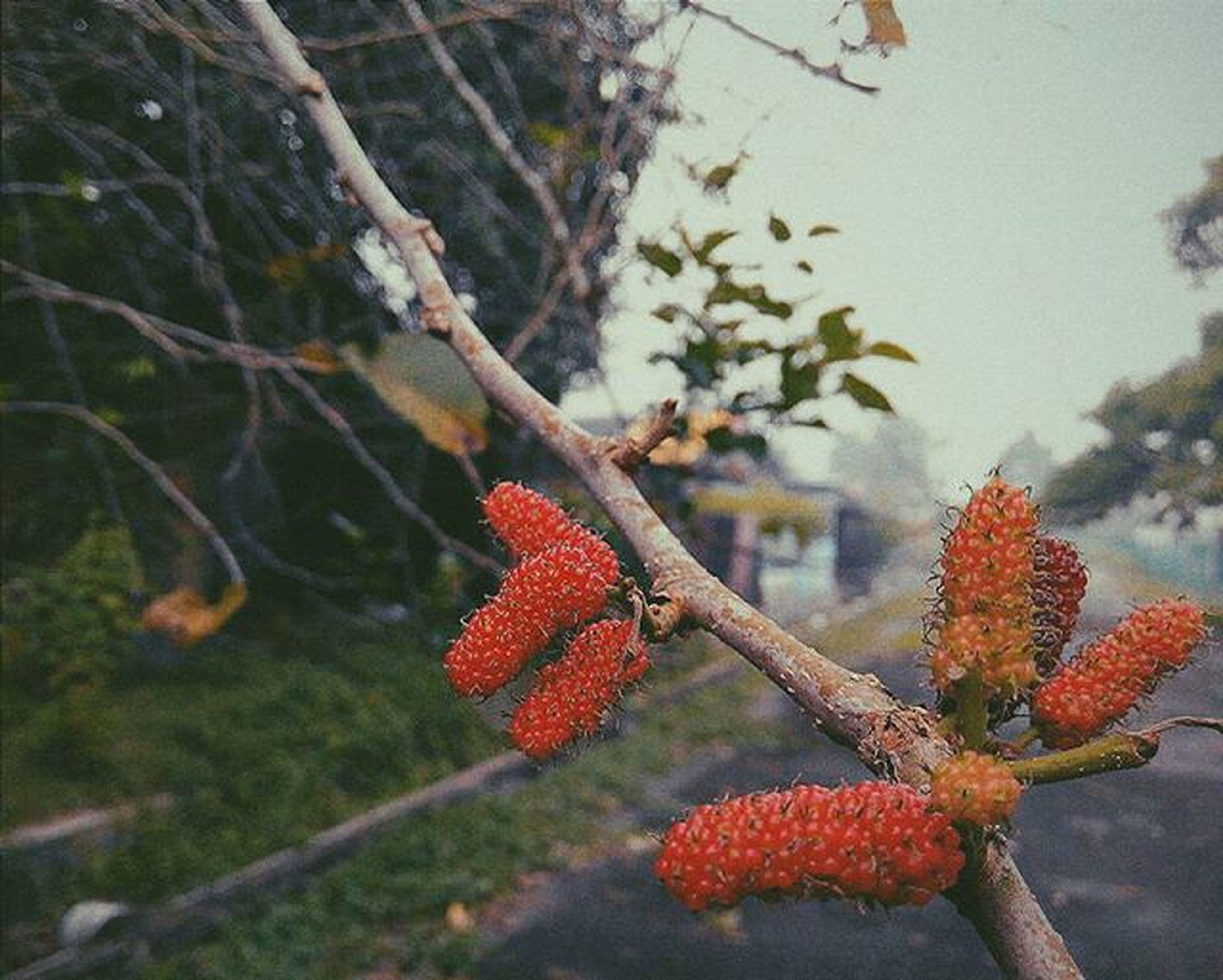 red, flower, growth, focus on foreground, branch, freshness, tree, close-up, nature, beauty in nature, fragility, plant, season, orange color, stem, tranquility, day, outdoors, no people, flower head