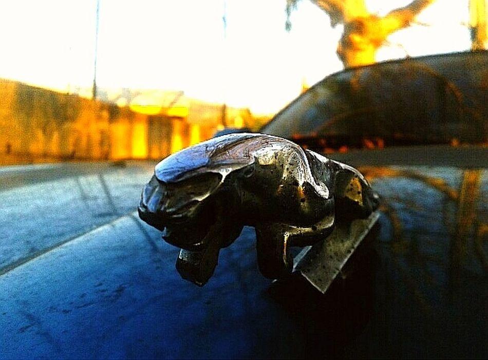 The Drive JAGUAR Jaguarcar Retro Retro Car Steel Outdoors S3mini Samsungphotography Samsung Focus No People Hobby Photography