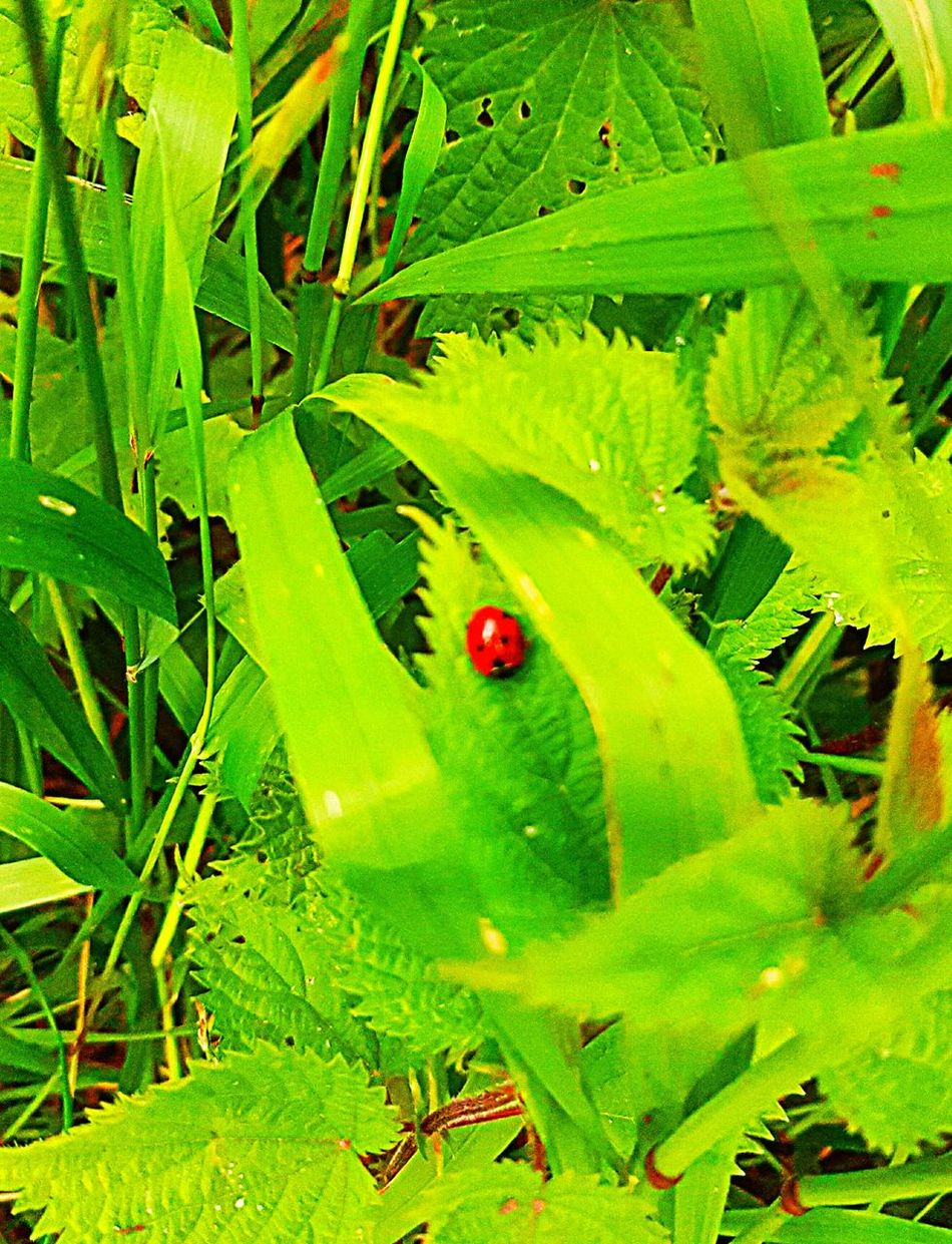 Taking Photos Check This Out Ladybirds 🐞 Closeupshot Close Up Nature Unfiltered Nature_collection Not Serious But Like