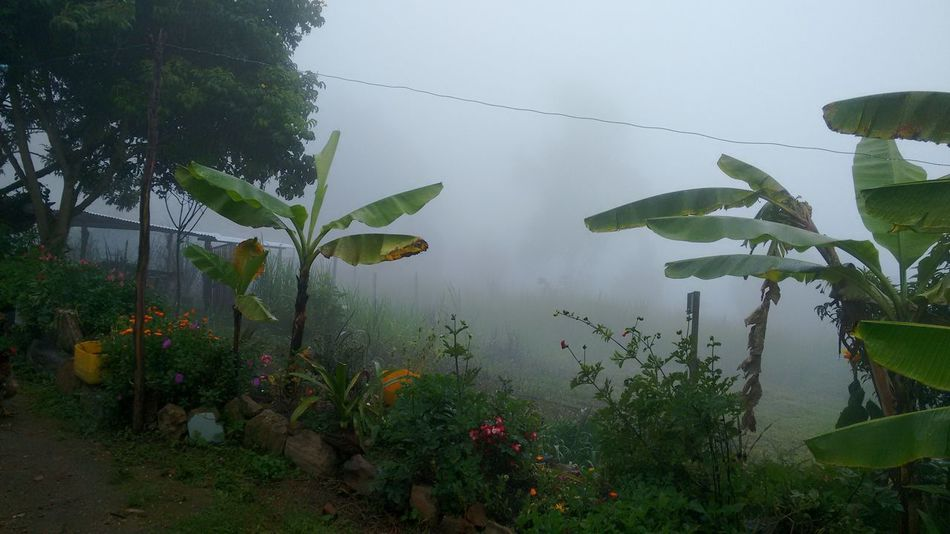 Rural scene Water Nature Growth Fog Green Color No People Outdoors Plant Beauty In Nature Lake Leaf Day Rural Scene Freshness Sky Tree Rural Scenes Fog_collection Fog Day Outside Photography Rural Photography No Filter, No Edit, Just Photography Garden