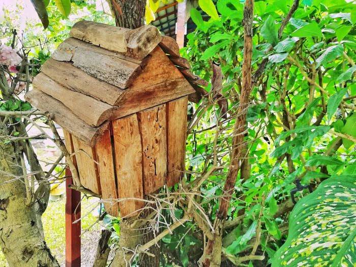 Day Outdoors No People Wood - Material Growth Plant Nature Tree Bird House Green Color Garden