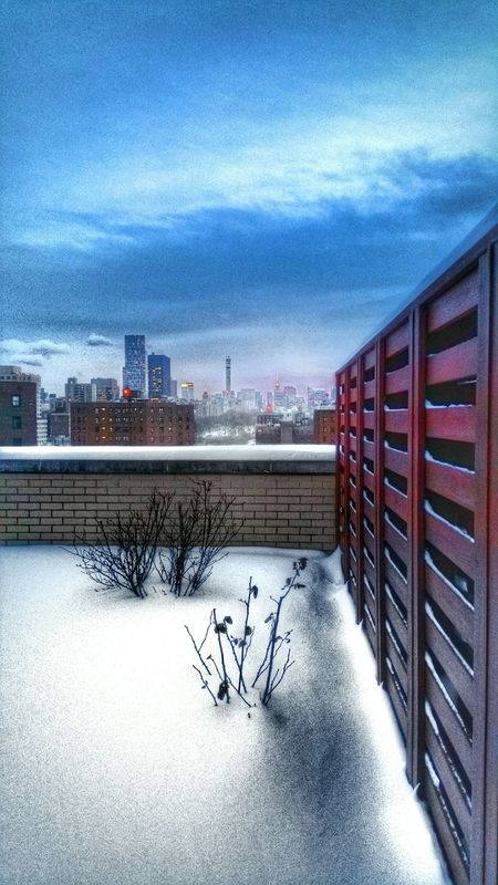 How's The Weather Today? Blizzard 2015 Enjoying The View New York City Harlem  Snowstorm