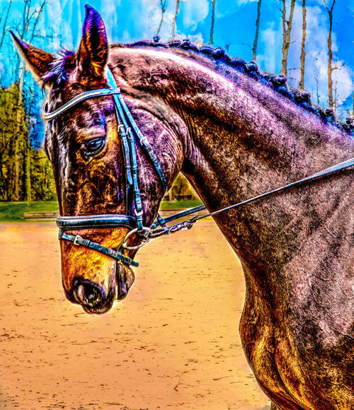 Animal Themes Domestic Animals Hdrphotography Horse Mammal Nature No People One Animal Outdoors Paard Pferd Sand