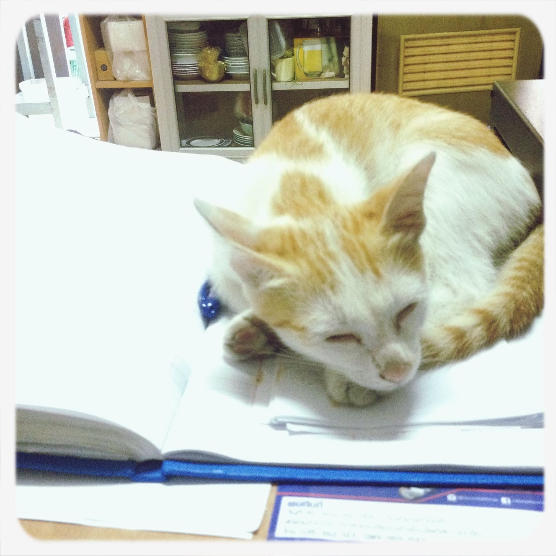 Sleeping Cat พนักงานบัญชี โชติรสอพาร์เมนท์ ห้องพักกว้าง สะอาด สะดวก ปลอดภัย ติดถนนใหญ่ ใกล้นิคมบางปะอิน สนใจเชิญสอบถามได้นะคะ ะคะ ]