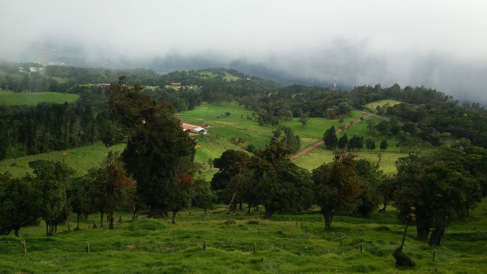 Outdoors No People Green Color Landscape Costa Rica Nature Photography Field Tranquility Nature Scenics Tree Rural Scene Day Captured Moment Esencial Cloud And Sky Costa Rica Y Su Naturaleza Low Angle View