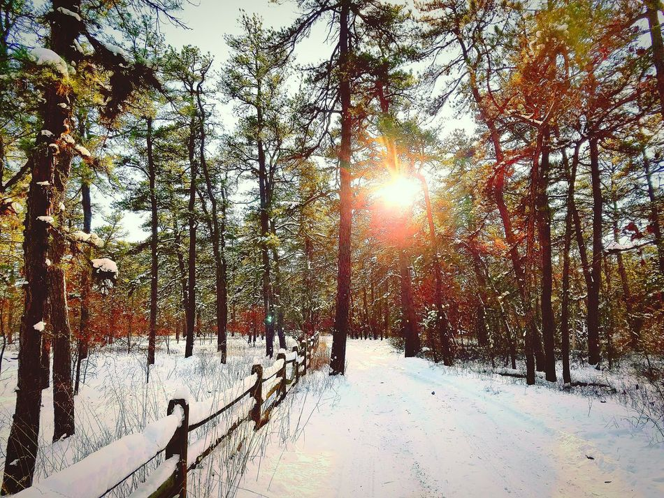 Snowy Batsto. Cold Temperature Winter Snow Nature No PeopleOutdoor Photography Tranquil Scene Sunlight Beauty In Nature Snow Beauty In Nature Outdoors Scenics Fence Woods Nature Beauty Nature Photography Eyemphotography Photo Of The Day Check This Out