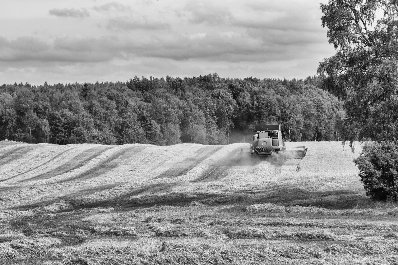 Harvest time - Agriculture Beauty In Nature Black And White Blackandwhite Cornfield Cultivated Land Exceptional Photographs EyeEm Best Shots - Black + White EyeEm Gallery Farming Farmland Field Fieldscape Harvest Time Hello World Landscape Nature Non-urban Scene Outdoors Scenics Sky The Week Of Eyeem Tranquil Scene Tranquility Rural Scene