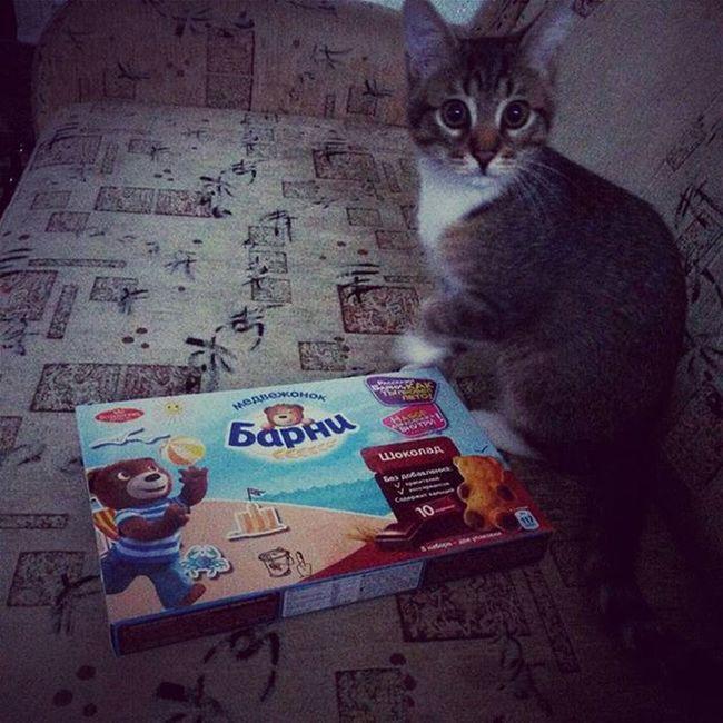 🐈😊 Kitty Love Barni Pet Russia Eat Animals Food Likeit Home Pretty Happy Photo Instagood
