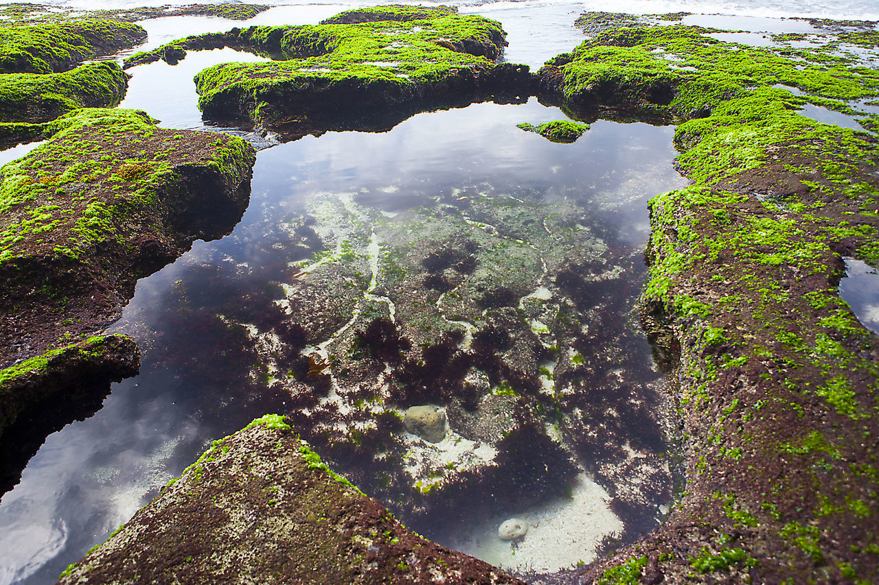 High Angle View Of Moss On Rock Formation In Sea
