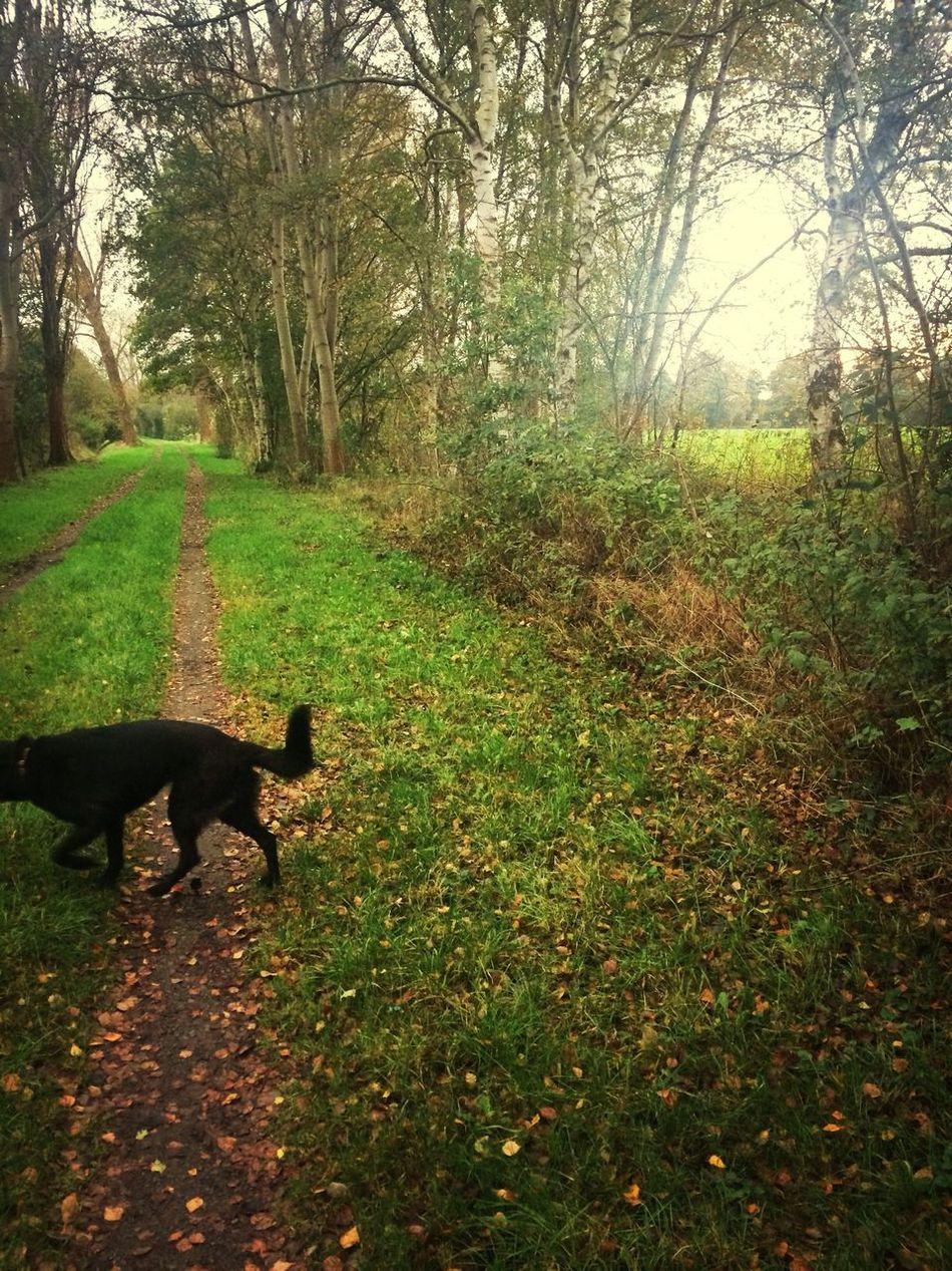 Autumn Hello World Melancholic Landscapes Enjoying Life