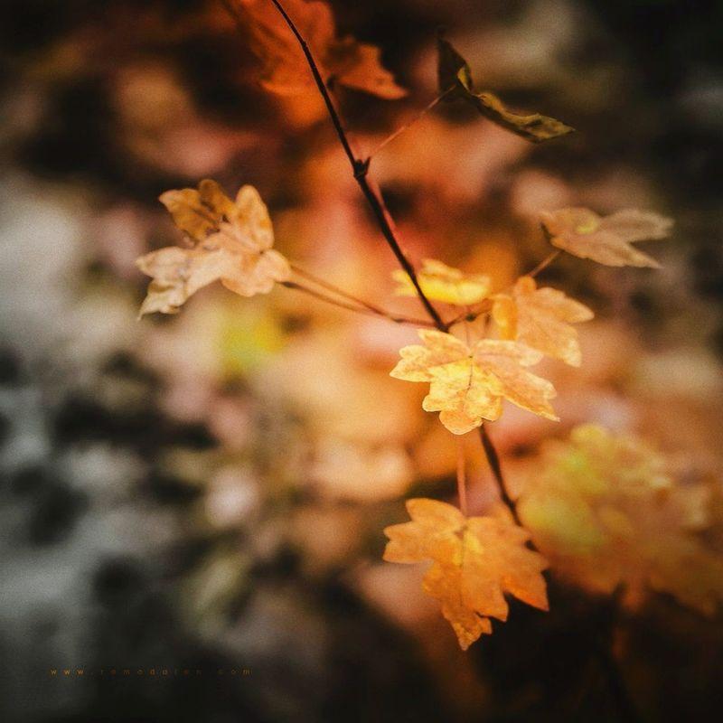 -my autumn- Autumn Leaves Wood Nature Orange Romadalen