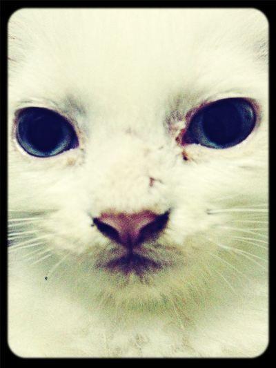 Cat Pets Selfportrait