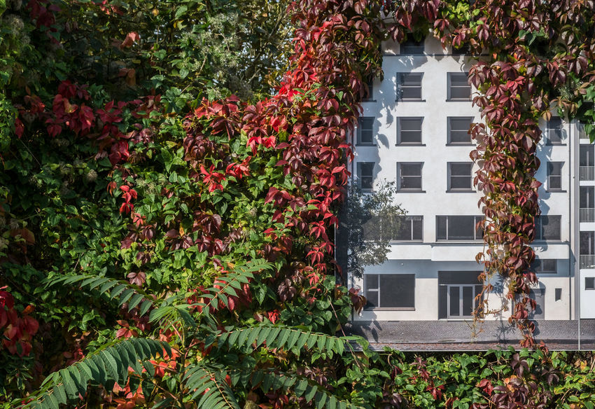 Theybuildtootinyhousesinberlin Architecture_collection Berlin Photography Architectural Feature Architecture Autumn Beauty In Nature Building Exterior Built Structure Creeper Plant Day Fujix_berlin Fujixseries Growth Humour Leaf Nature No People Outdoors Plant Ralfpollack_fotografie Urban Plant