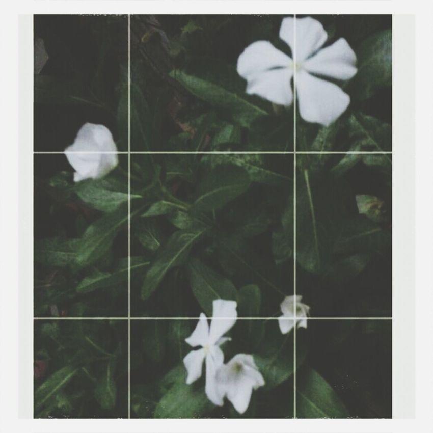 My Flower White Loveu♥ Tumblr