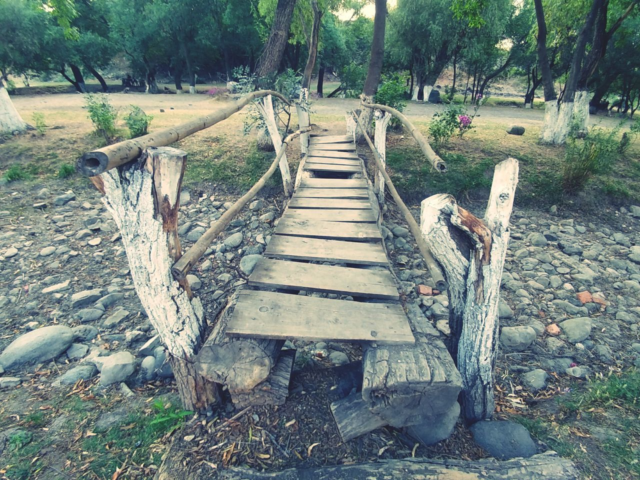 Tree Nature Wood - Material Outdoors Day No People Bridge