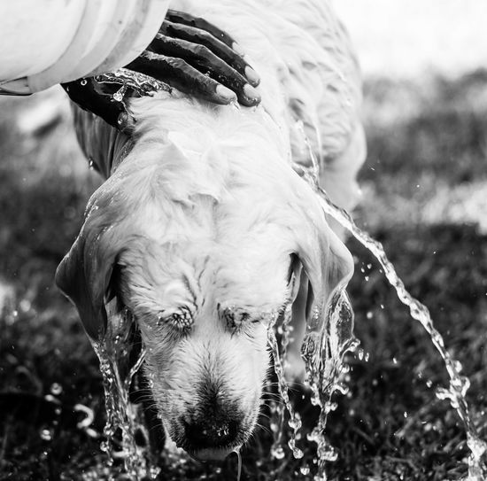 Best EyeEm Shot Care Enjoying Water LabradorRetriever Pet Portraits The Week On EyeEm Animal Themes Careful Close-up Dog Dog Portrait Dog Wash Domestic Animals Drops Of Water Enjoying Life EyeEm Dogs Focus On Foreground Love For Animals No People Pets Water Water In Motion