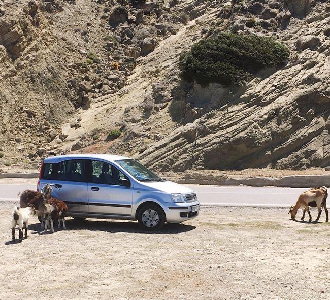 Goats Oldmeetsnew Rhodos, Greece  Roadtrip