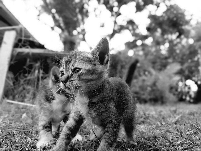 Animal Themes Domestic Animals Pets One Animal Mammal No People Portrait Nature Day Outdoors Horizontal Close-up Cat Kitten Cute Cat Cute Kitten