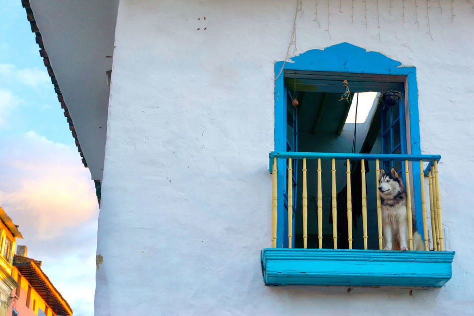 Dog sitting on a historic colonial balcony in Bogota, Colombia America Architecture Balcony Bogotá Building Candelaria Capital City Colombia Colonial Colors Cundinamarca Destination Dog Downtown Façade Historic House Landmark Outdoors South Street Traditional Travel Urban