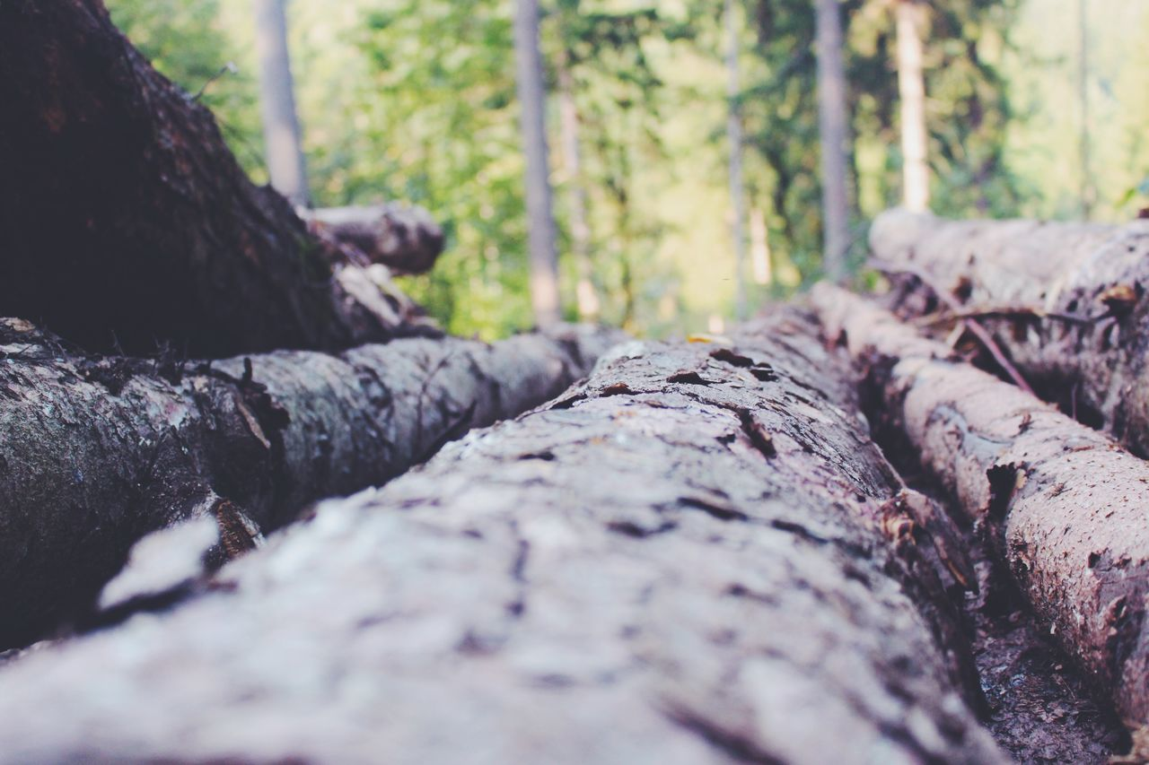 Logs With Trees In The Forest