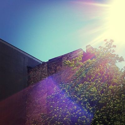 sunshine at Capsule.fm HQ by Danielle Reid