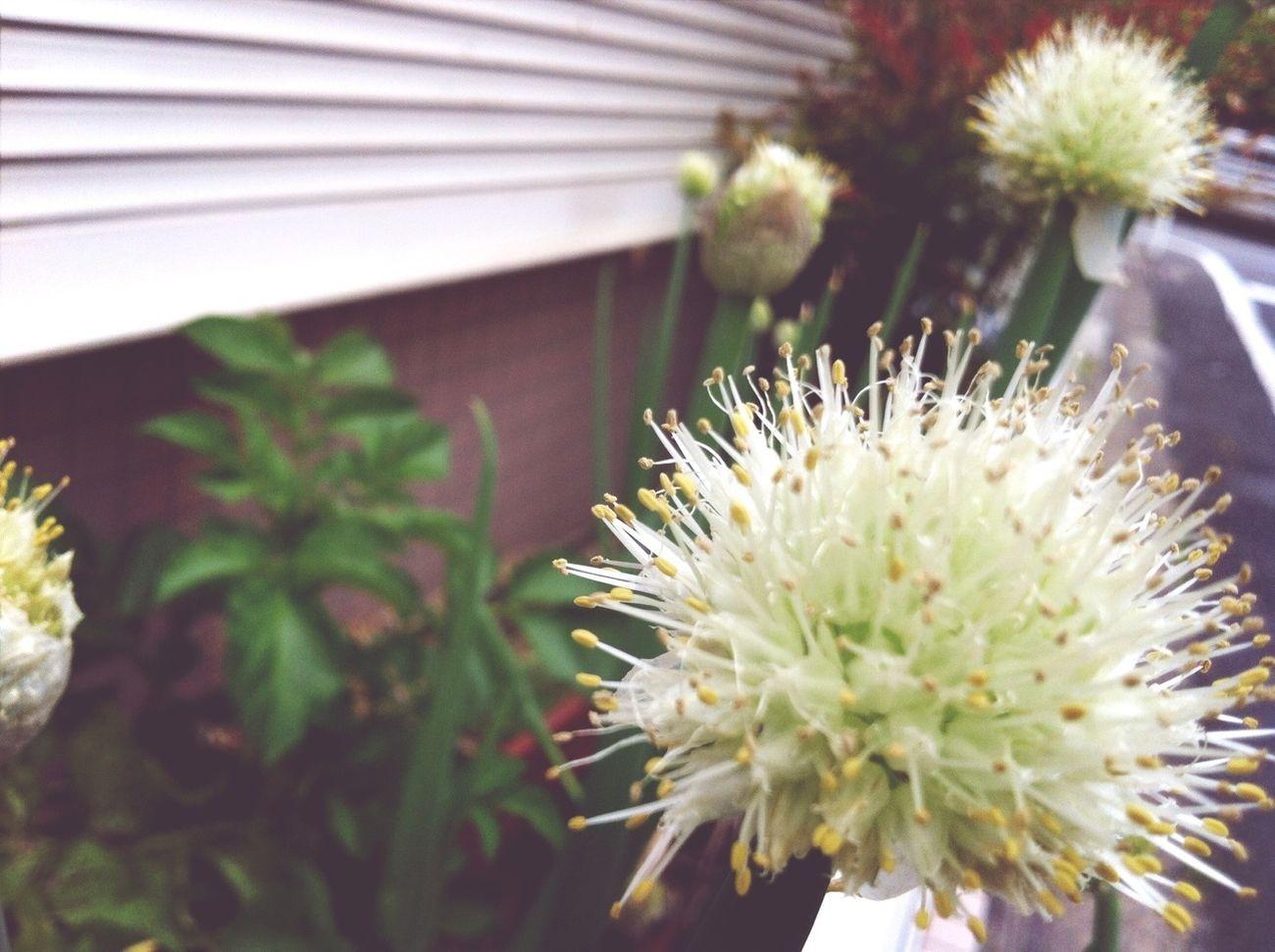Vegetable Flower