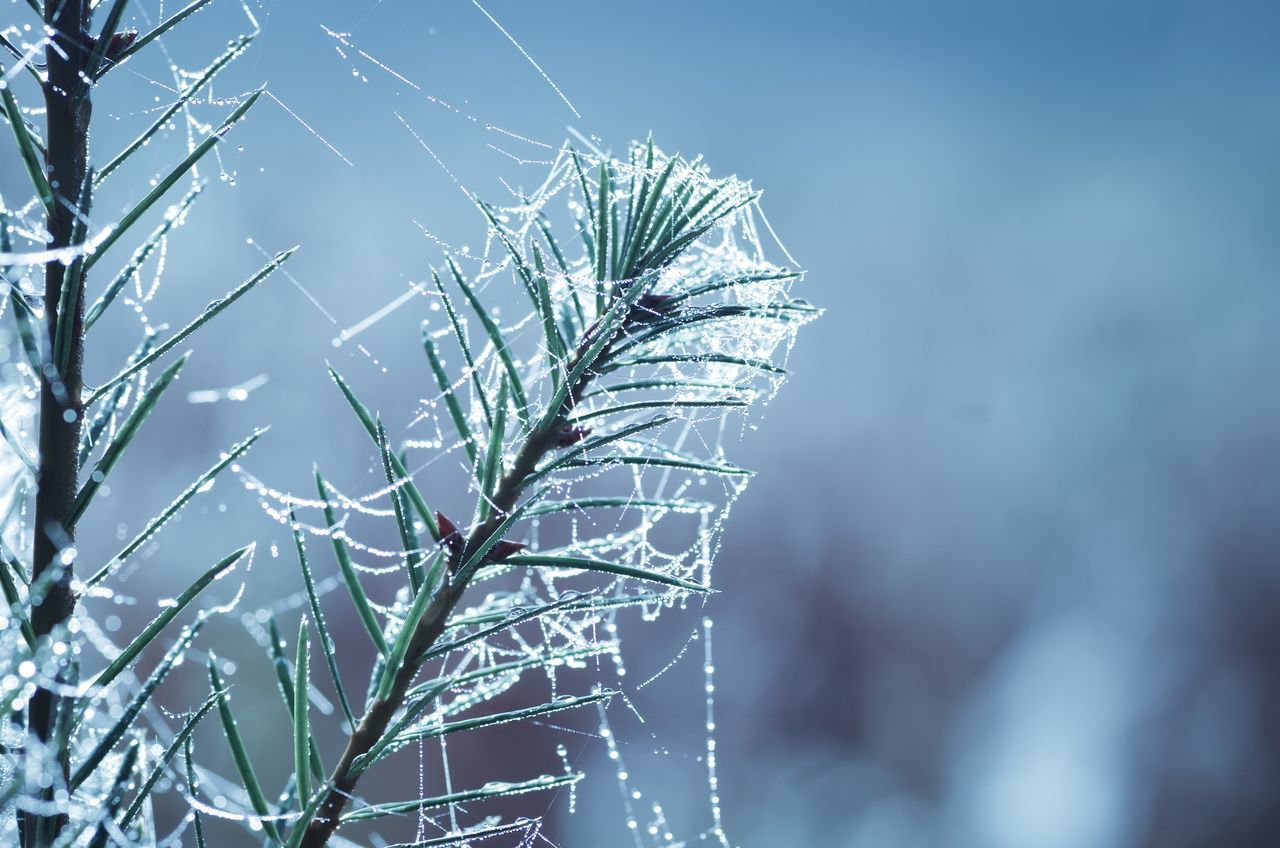 Focus On Foreground Nature Close-up Plant No People Outdoors Fragility Winter Growth Beauty In Nature Spider Web Sky