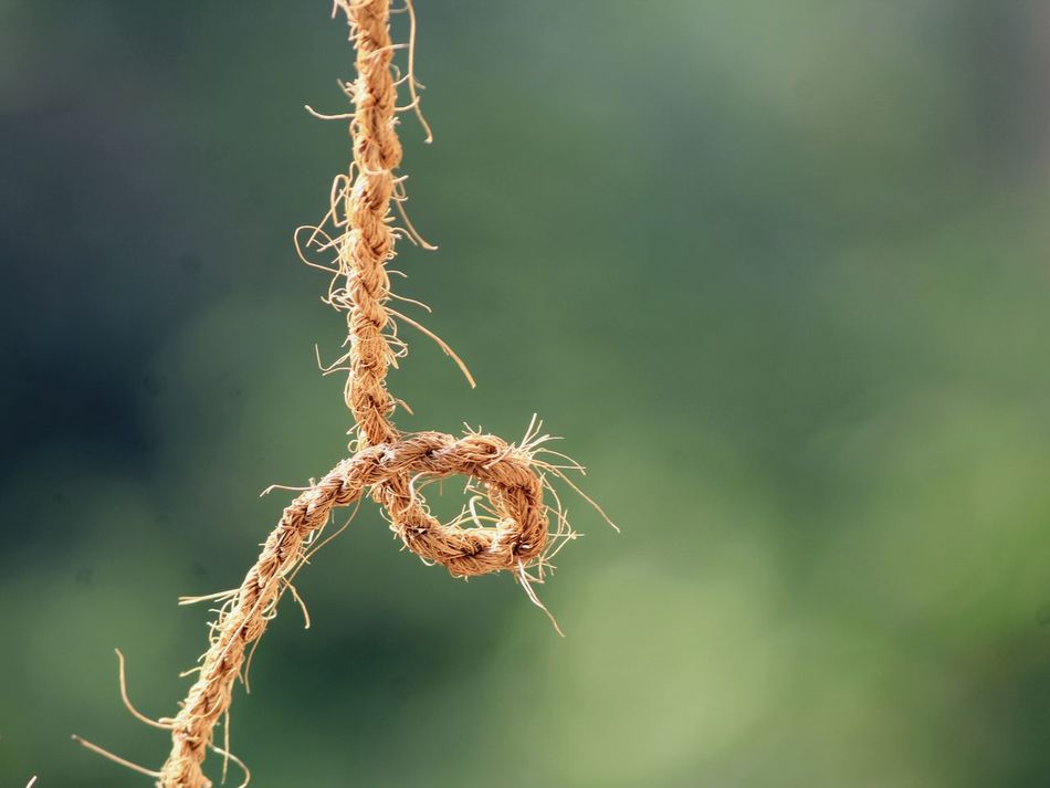 Cable Rope Thread Jute Grip Details Macro Bokeh Non-urban Scene Ropes Close-up Jute Rug Lieblingsteil Nature Focus On Foreground Branch No People Outdoors Beauty In Nature Fragility Day Tree Plant Part
