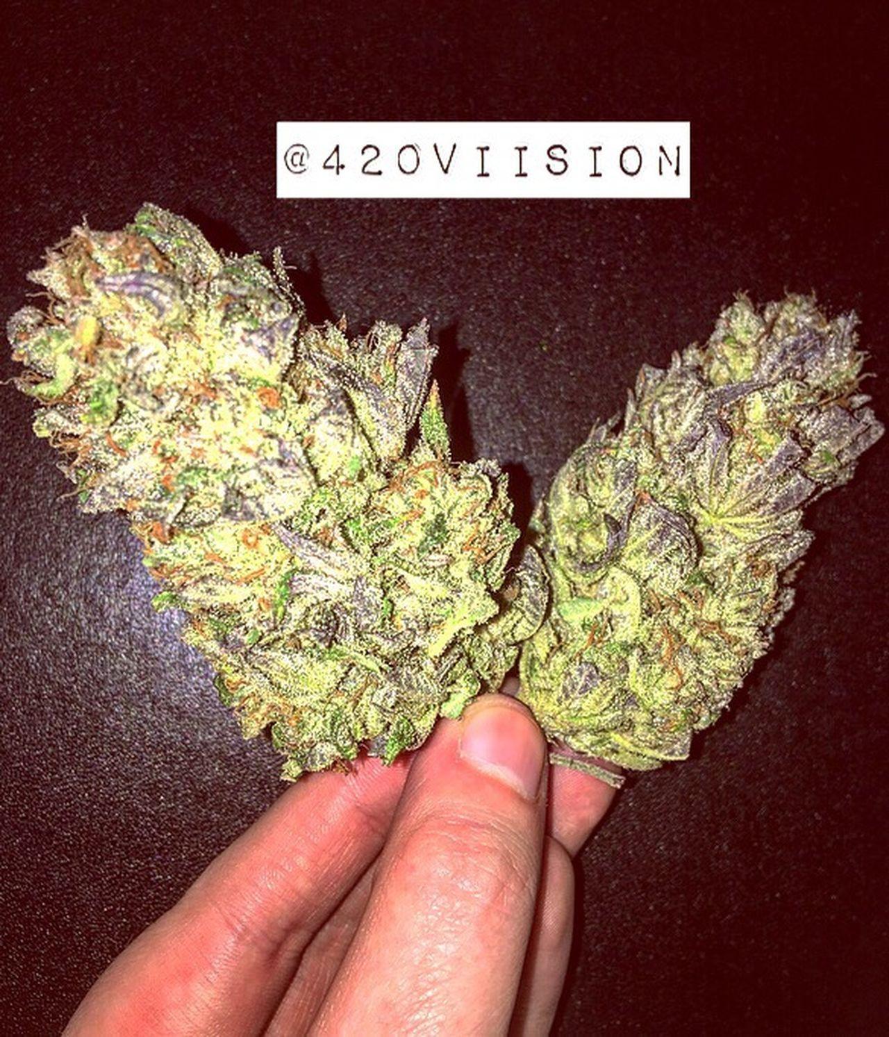 Weed Wings 👼🏼💚 Human Hand Weed Life Canabis 420life 420society 420Friendly Marajuana Hand Woman