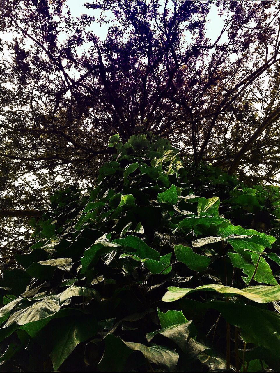 growth, tree, nature, beauty in nature, green color, plant, leaf, botany, branch, no people, tranquility, fragility, outdoors, day, freshness, low angle view, forest, flower, close-up