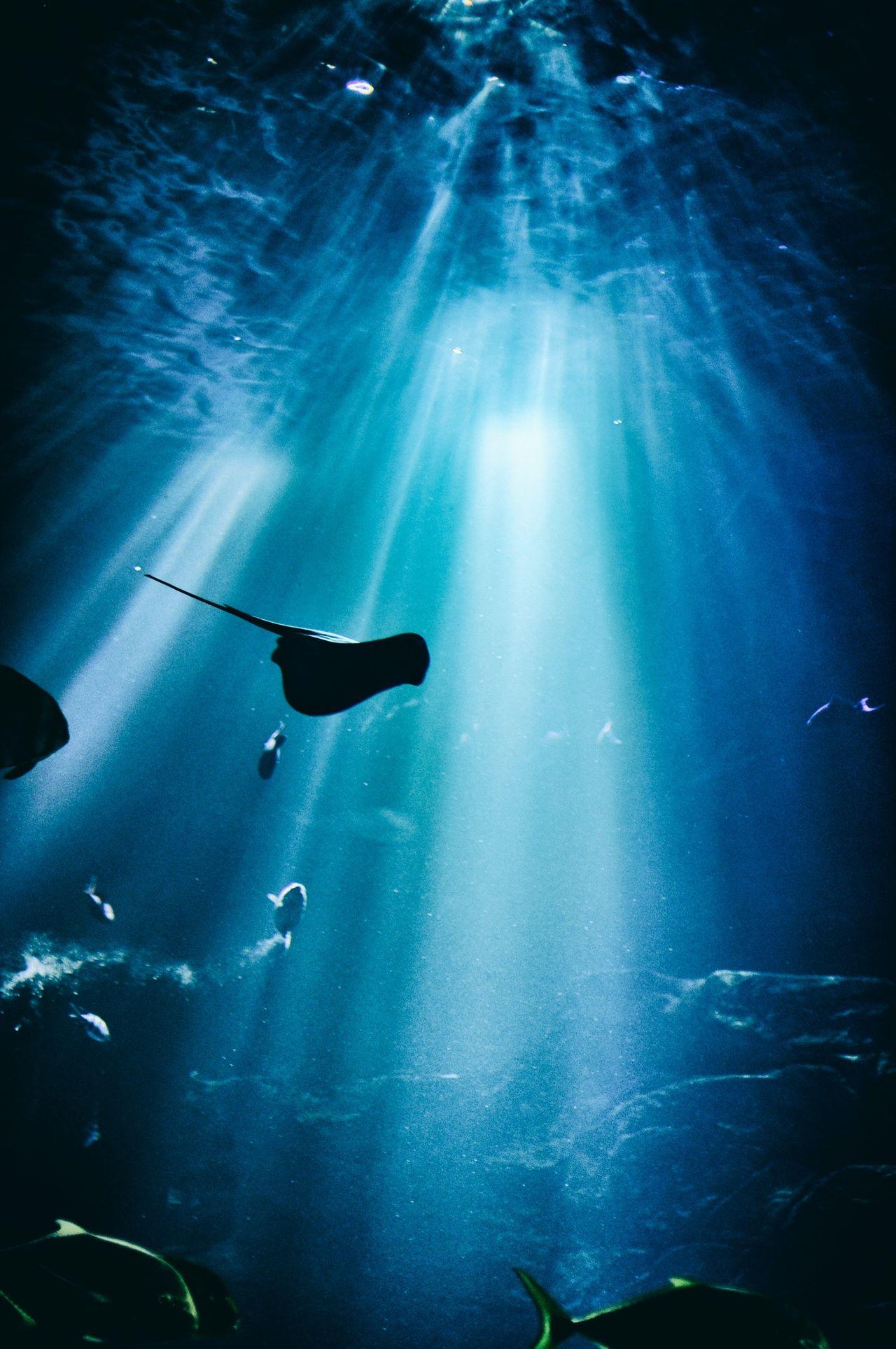 Beautiful stock photos of fish, Animal Themes, Fish, Light - Natural Phenomenon, Low Angle View