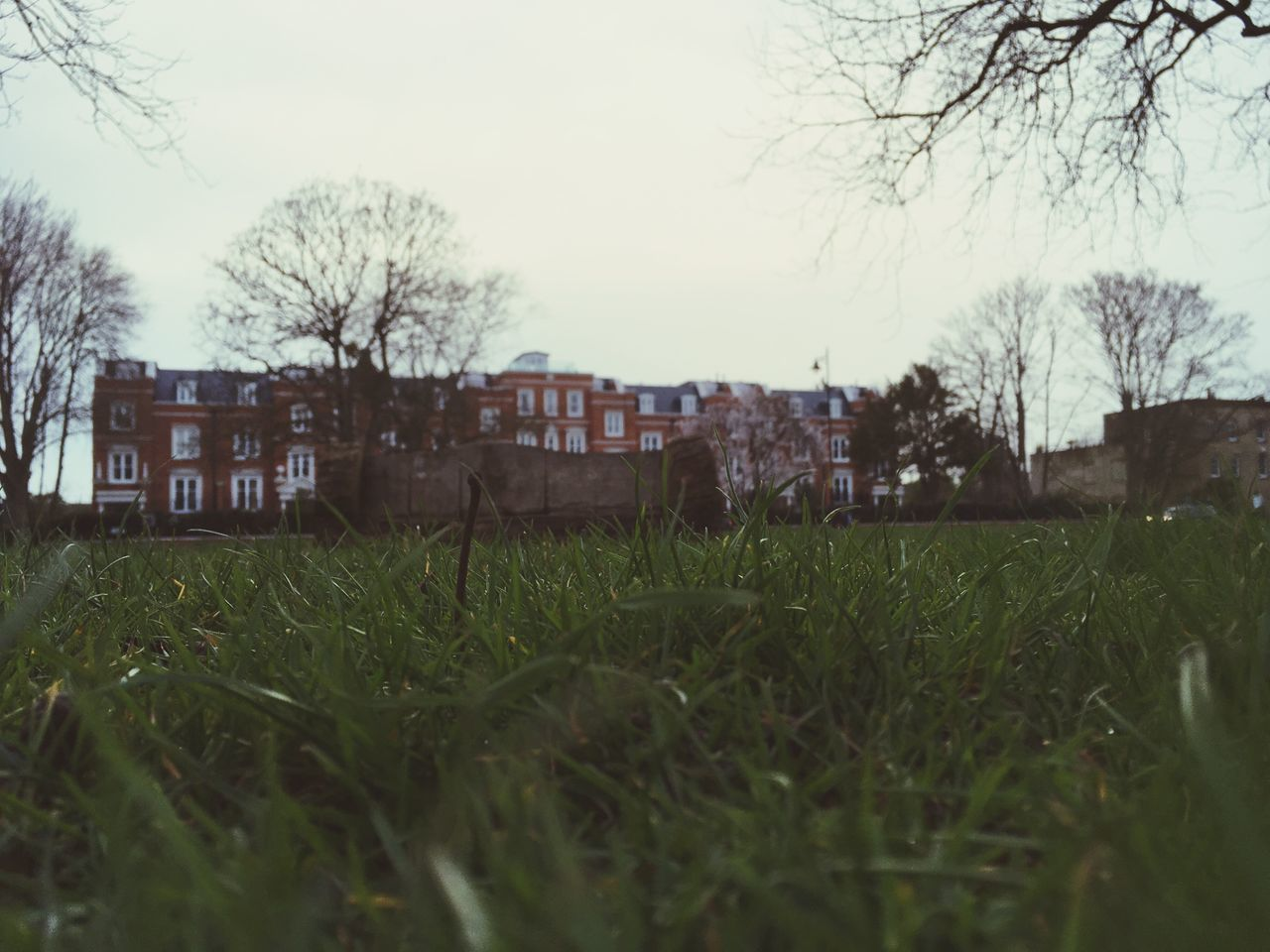 grass, architecture, building exterior, house, built structure, field, tree, outdoors, sky, no people, nature, clear sky, day