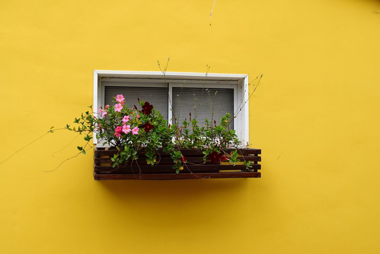 City Street in Tel Aviv Plant Growth Potted Plant Yellow No People Architecture Window Built Structure Flower Window Box Nature Building Exterior Outdoors Fragility Freshness Flower Head Yellow Color Yellow Background Plant Nursery Spring Summer Street City Life Neon Life