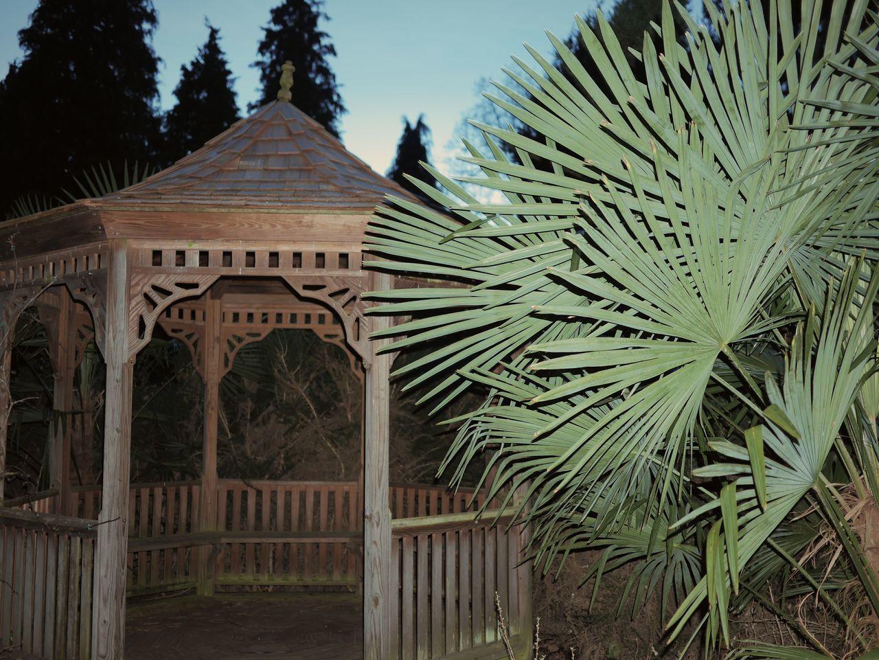 Tree Architecture Built Structure Building Exterior No People Outdoors Plant Nature Minimal Minimalism Beauty In Nature Arboretum Bokrijk