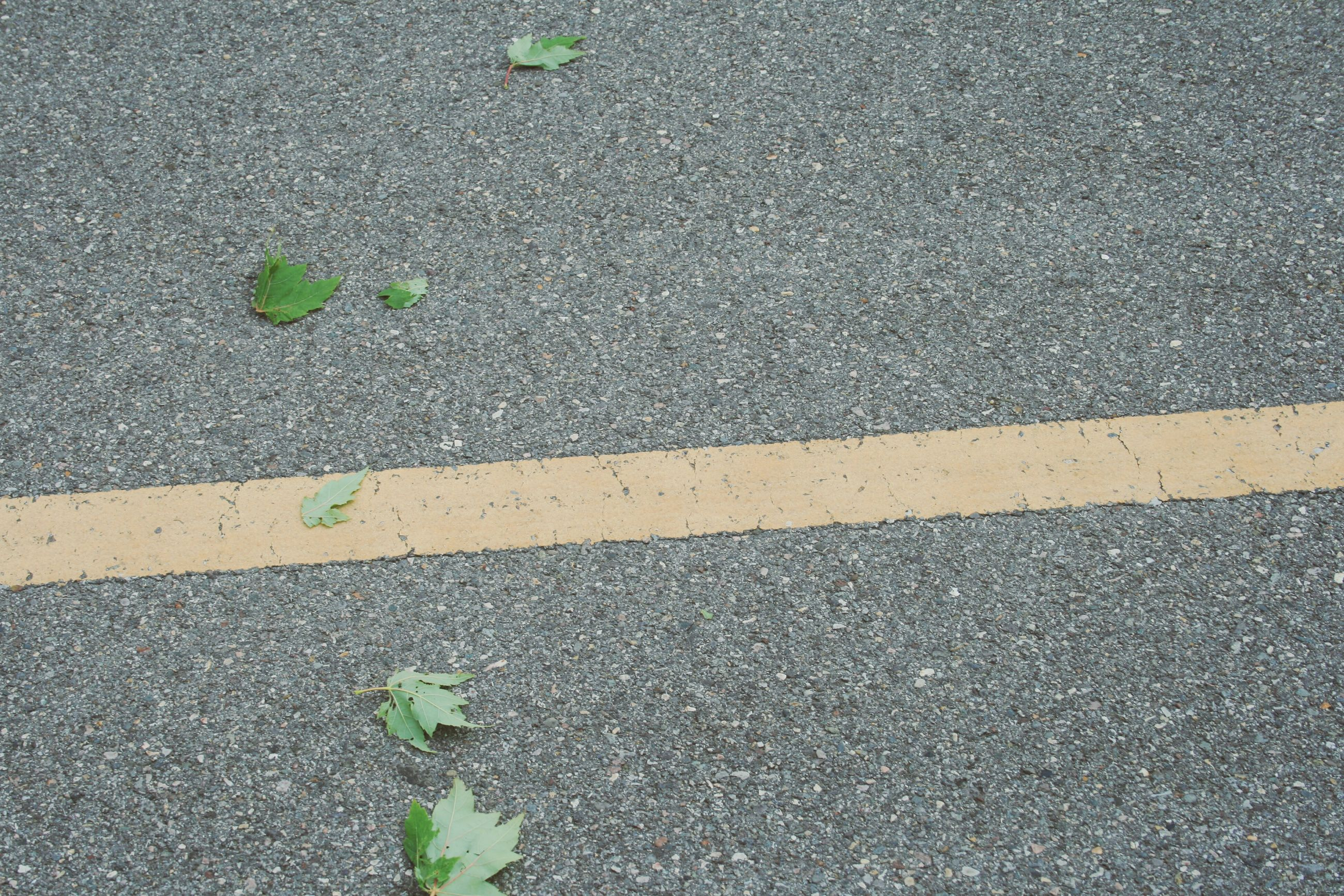 street, asphalt, high angle view, road, road marking, transportation, day, outdoors, leaf, no people, textured, nature, sunlight, growth, ground, plant, close-up, shadow, full frame, green color