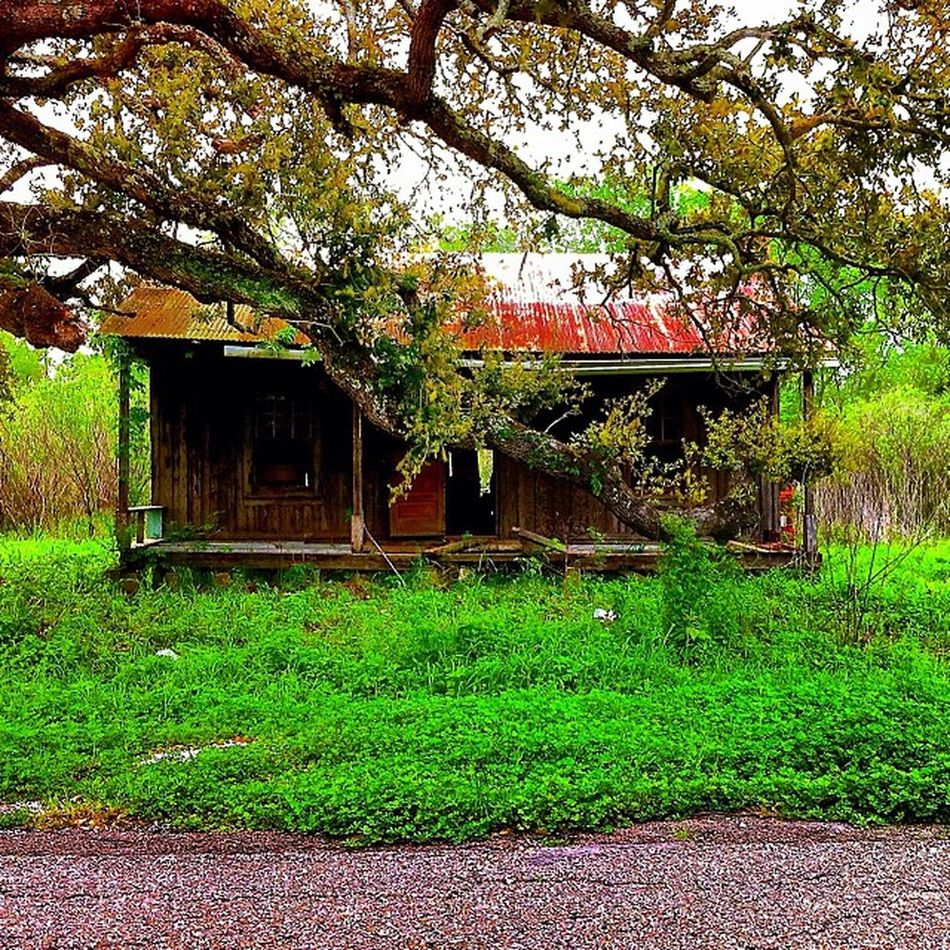 Vintage Abandoned Creepy Classic Haunted Grass Broken Closed Louisiana Bayou Condemned Damaged Dreary Trailblazers_rurex TheSouthernCollective Deepsouth OutcastAmerica Onlylouisiana Louisianatravel Trb_love_shack_baby Oca_members