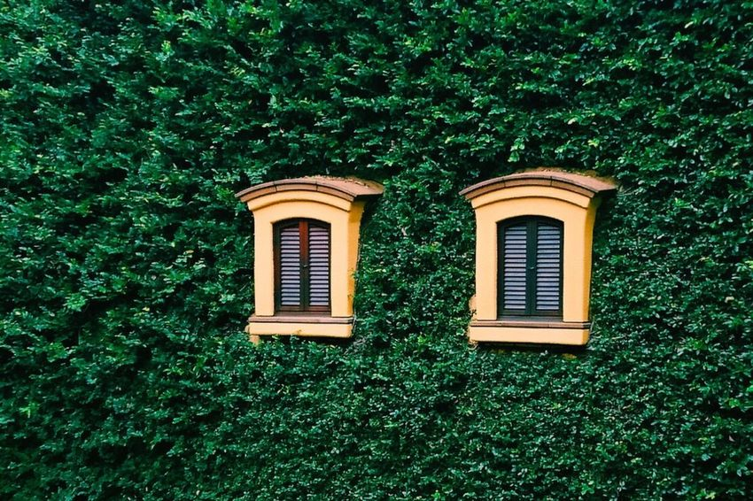 Window Architecture Built Structure Green Color Building Exterior Plant Growth Close-up Creeper Green High Section Creeper Plant Outdoors Day No People Window Frame
