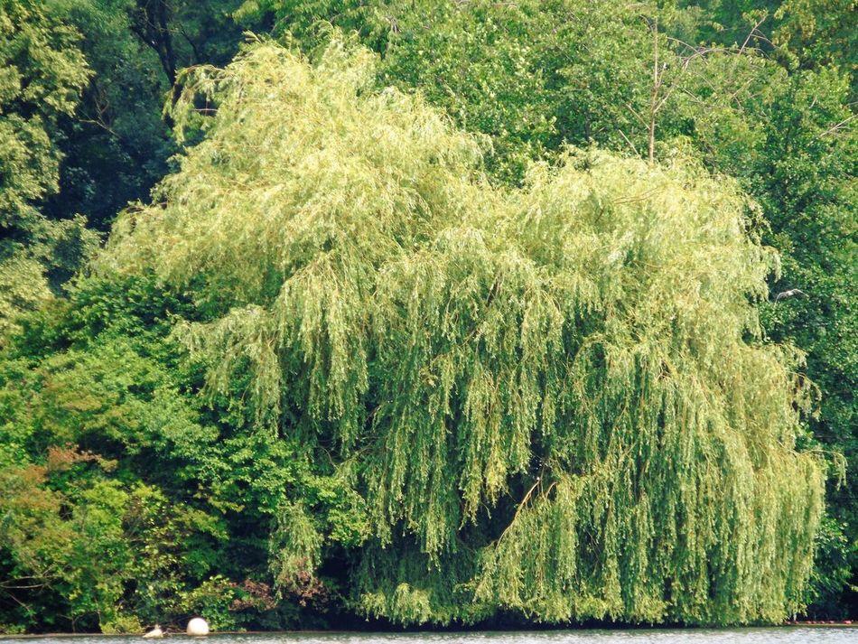 Beauty In Nature Idyllic Impessionen Lake Unterbach Non-urban Scene Outdoors Tranquility Tree Unterbacher See